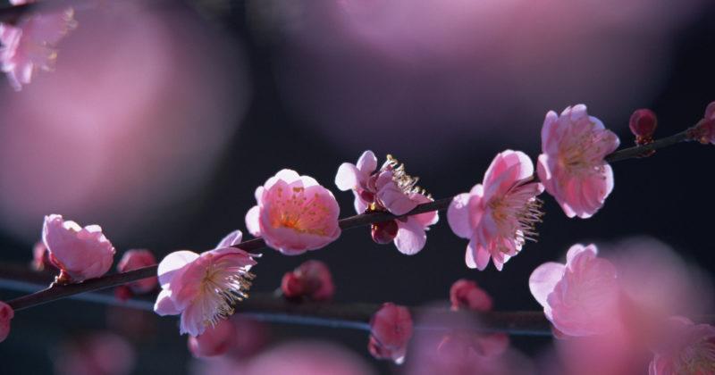 Тайский молд Листа яблони. Обзор