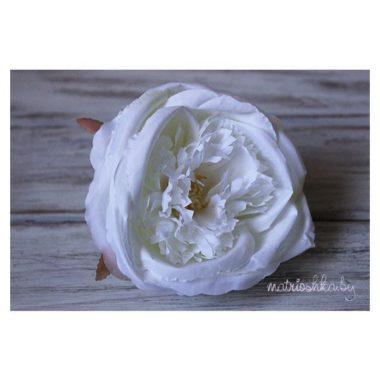 """Роза пионовидная """"Снежный белый"""""""